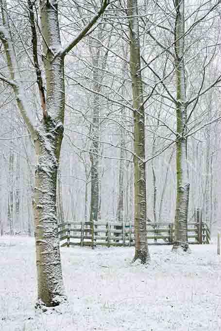 Winterlandscape Color 30