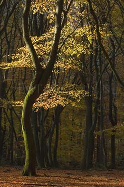 Landscape Color 54