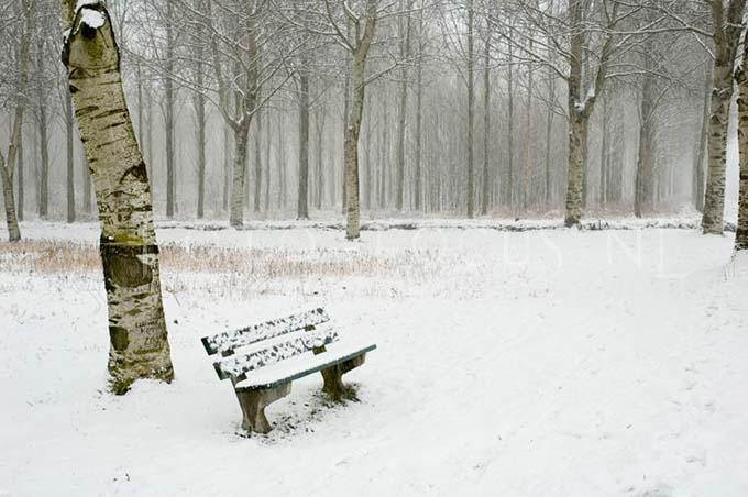 Winterlandscape Color 17.jpg