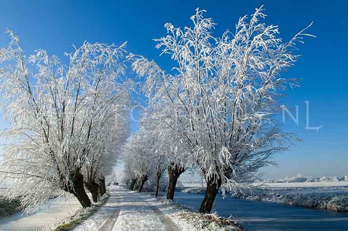 Winterlandscape Color 15.jpg