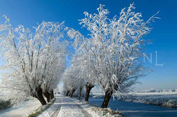 Winterlandscapes Color