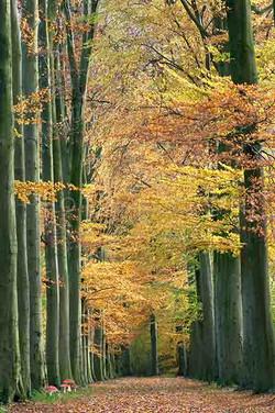 Landscape Color 22