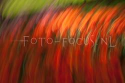 abstract 39.jpg