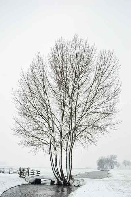 Winterlandscape Color 32.jpg
