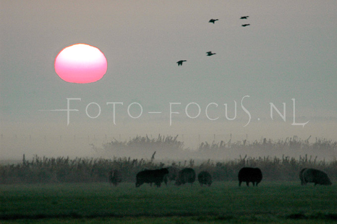 Landscape Color 05.JPG