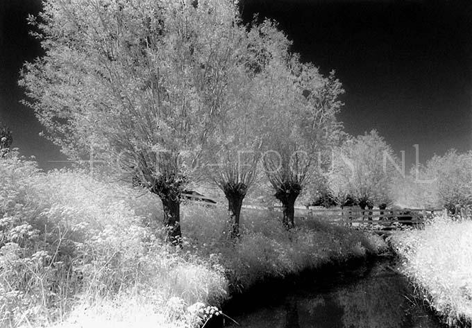 Infrared B&W 014.jpg