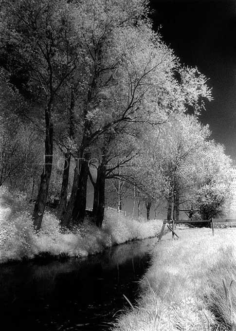 Infrared B&W 002.jpg