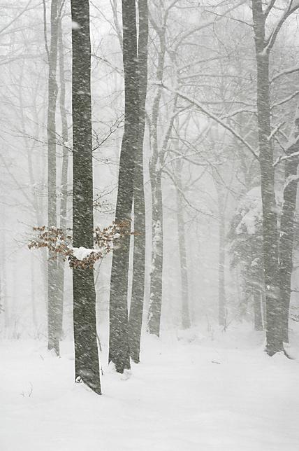 winter Spa