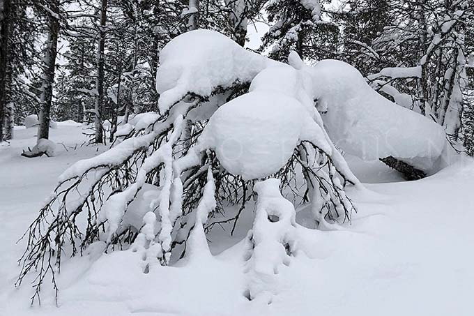 Lapland color 7
