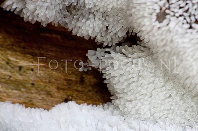 Ceratiomyxa fruticulosa var. fruticulosa - IJsvingertje2