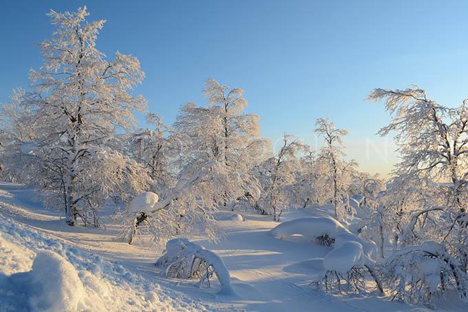 Lapland color 012
