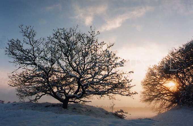 Winterlandscape Color 11.jpg