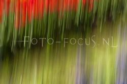 abstract 40.jpg
