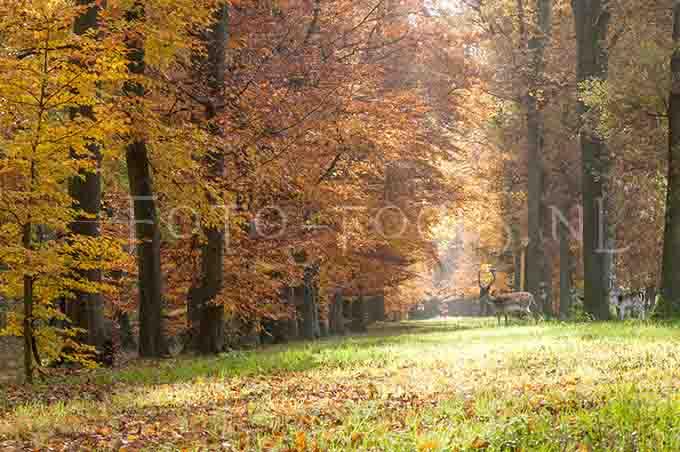Landscape Color 16.jpg