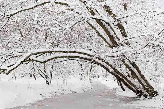 Winterlandscape Color 28