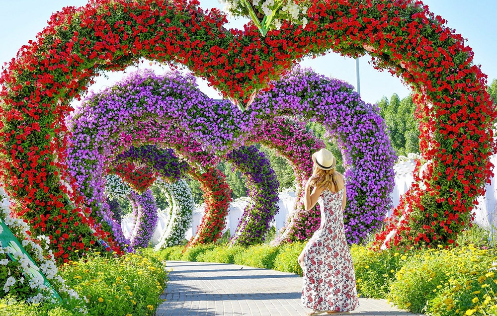 The Miracle Garden in Dubai takes you into a flowery wonderland in between the desert city of Dubai.