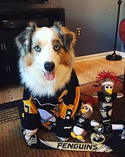 dog-penguins-jersey.jpeg