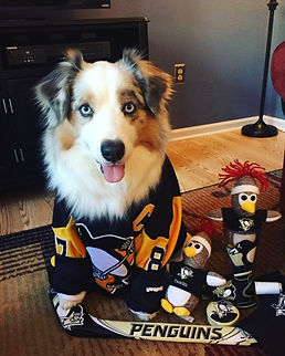 dog-penguins-jersey.jpeg