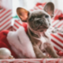 fb-boxer-pup-gifts-1200x628_edited.jpg