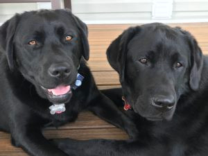 Dogs of the Month September 2018