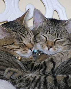 two-cats-sleeping.jpg