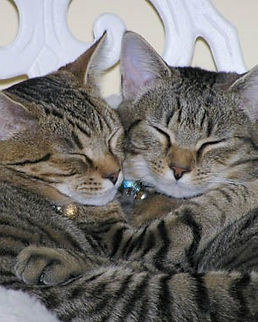 two-cats-sleeping.jpg
