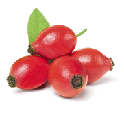 rose hip.png
