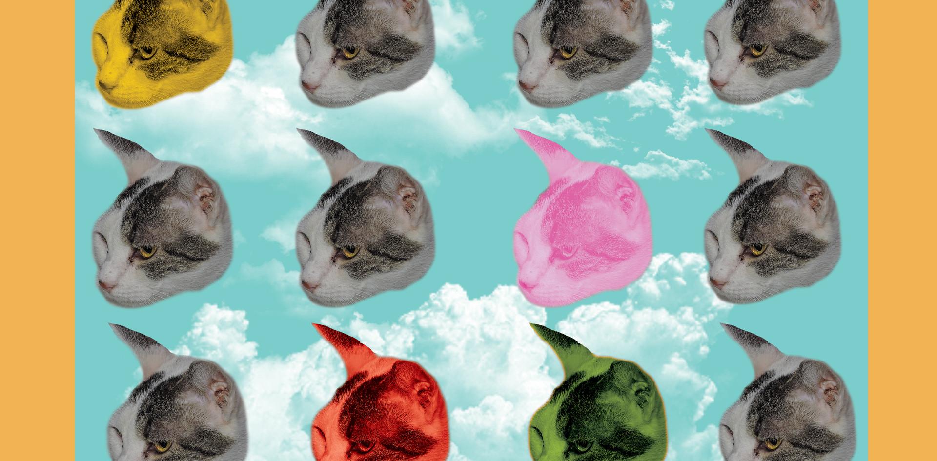 """Cloud kitty"""