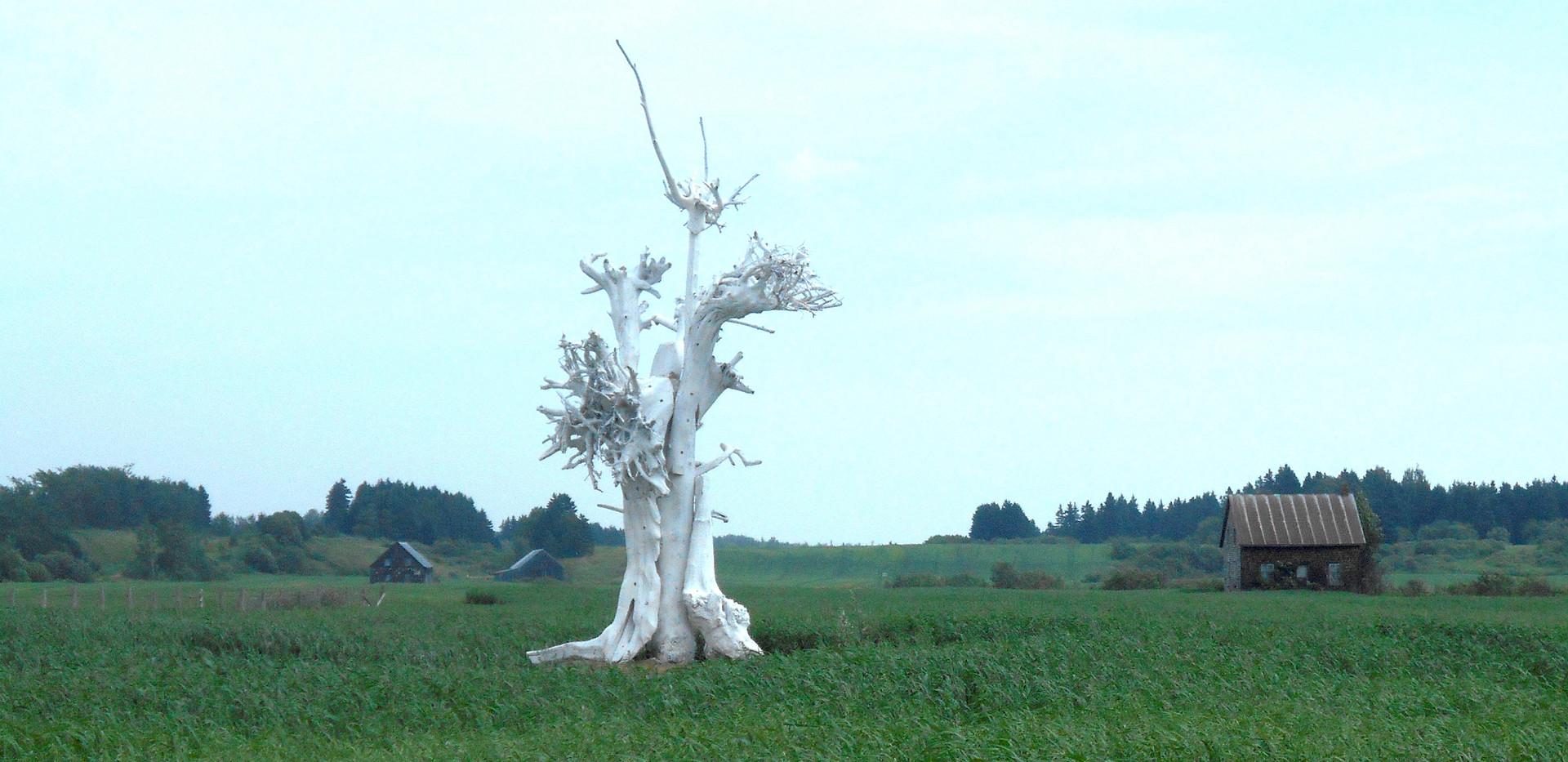 L'arbre à l'envers