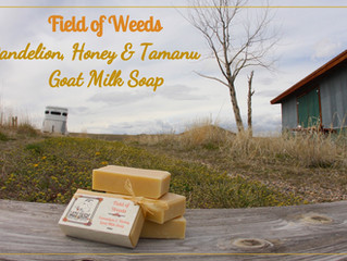 Field of Weeds ~ Dandelion & Honey Goat     Milk Soap