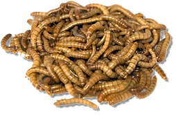 7124814_earthworm-mealworm-png-download.