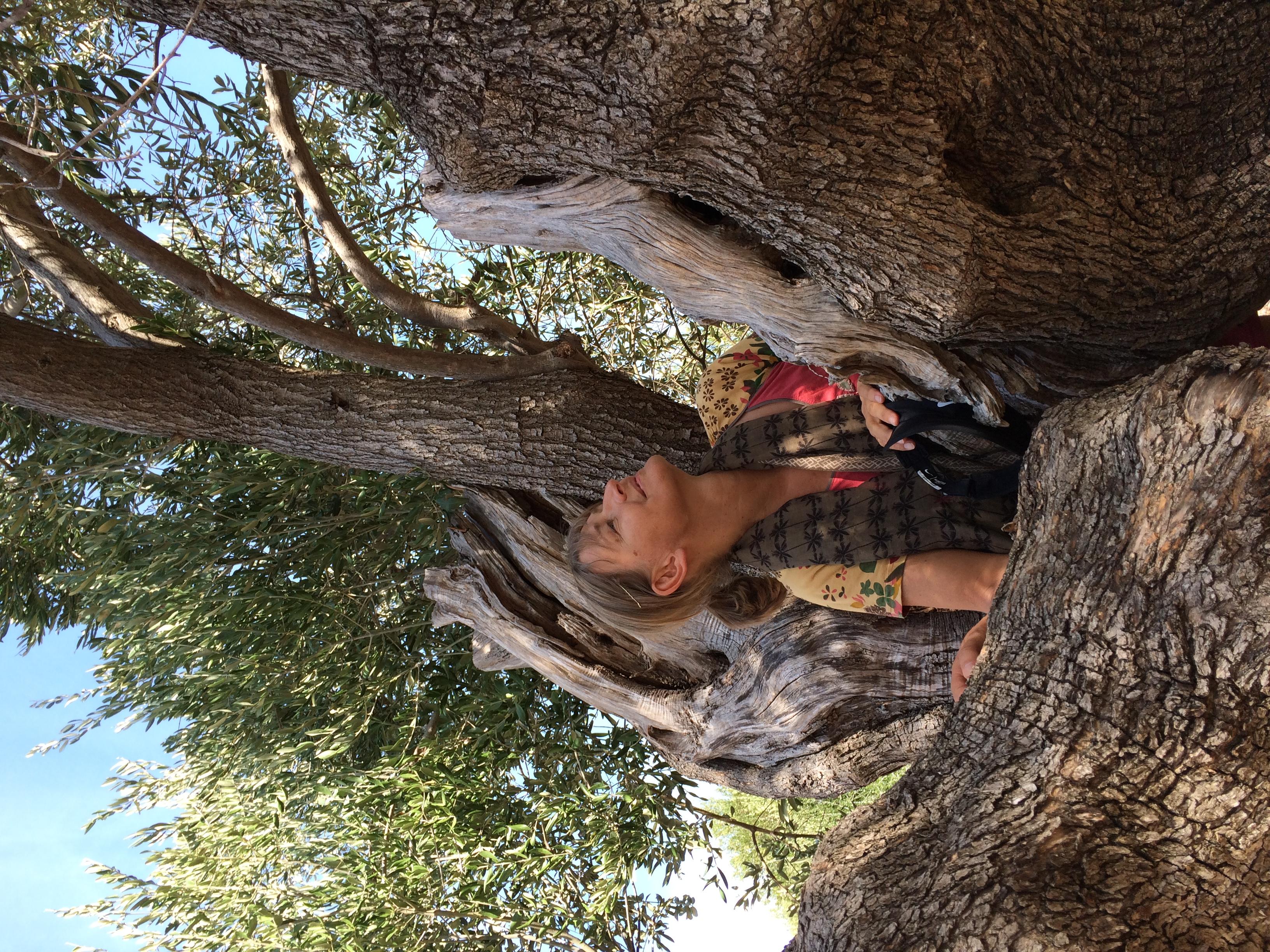 Weltkulturerbe Olivenbäume