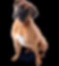 Lare Dog