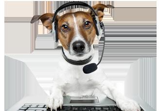 Contact us dog