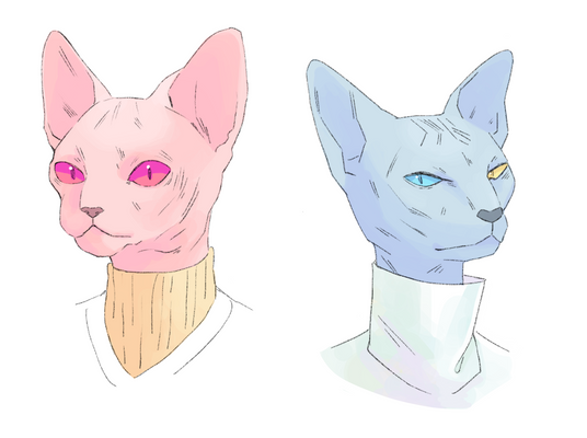 sphnx cats