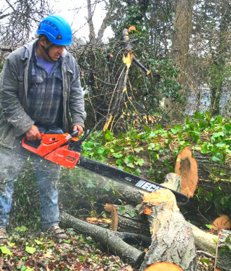 Melendez Tree Services VA