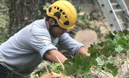 Melendez Tree Services