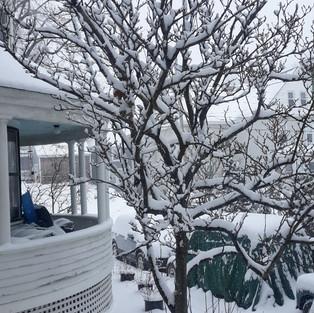 house and tree-Maine