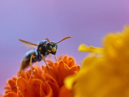 Mes abeilles au printemps