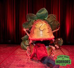 Little Shop of Horrors_Driftwood Mag--7.