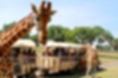Parque-tematico-Reino-animal-en-Teotihua
