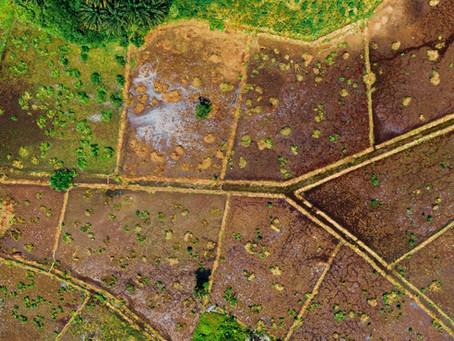 ACELI AFRICA | Agri SMEs Business Coaching | WYLDE International Case Study