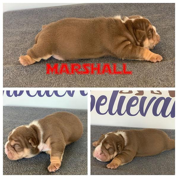 Marshall 2 weeks old.JPG