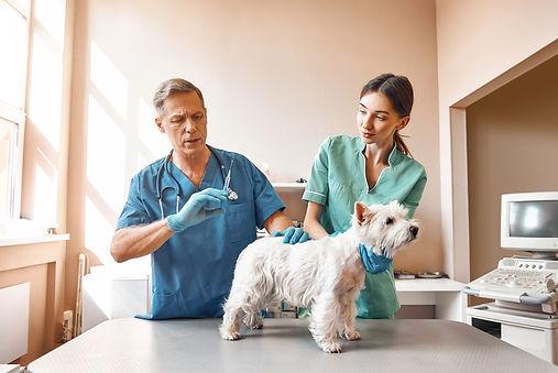 auxiliar-veterinario.jpg