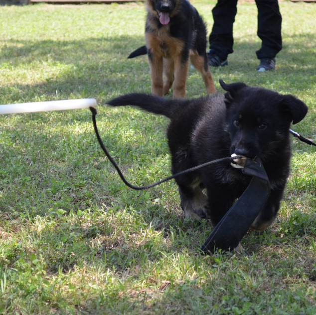 Titus, Cora son at the working dog seminar