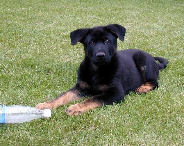 Dakar in Czech Republic as a pup