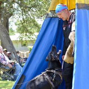Cora at a Working Dog Seminar in Texas