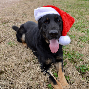 Merry Christmas Cora!
