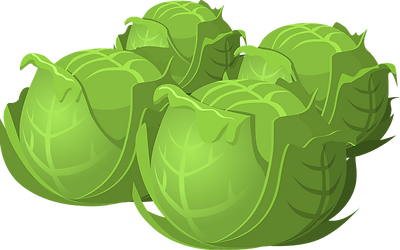 cabbage-575525_1280.png