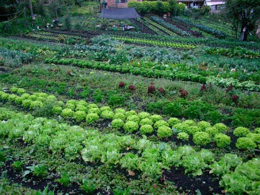 Con la agroecología se aumenta la producción